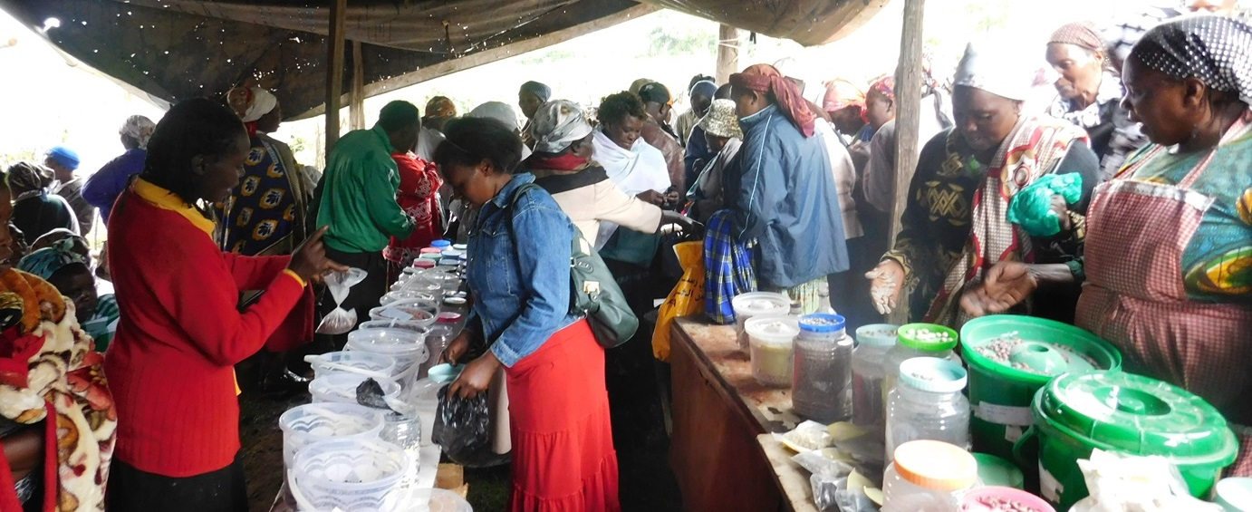 End of year seed fair by Seed Savers Network