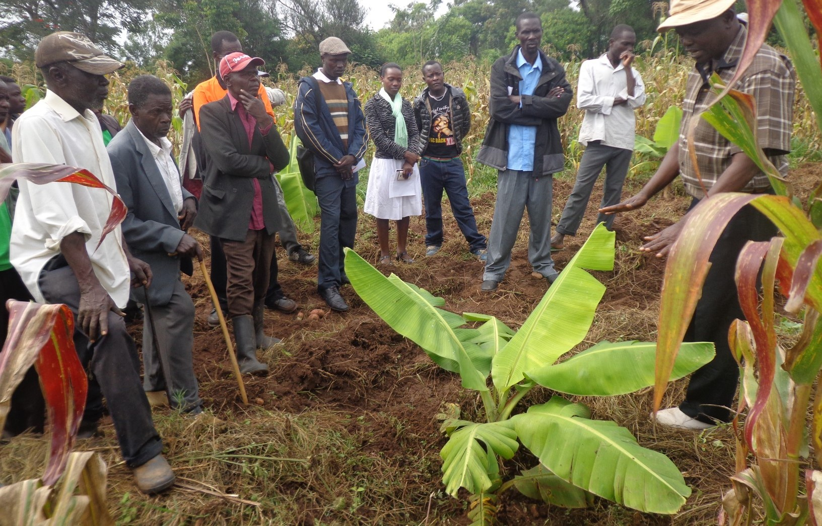 Farmer to farmer exchange visit in Nyanza zone